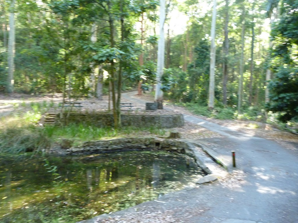 A small pond and picnic area at the Blackbutt Reserve
