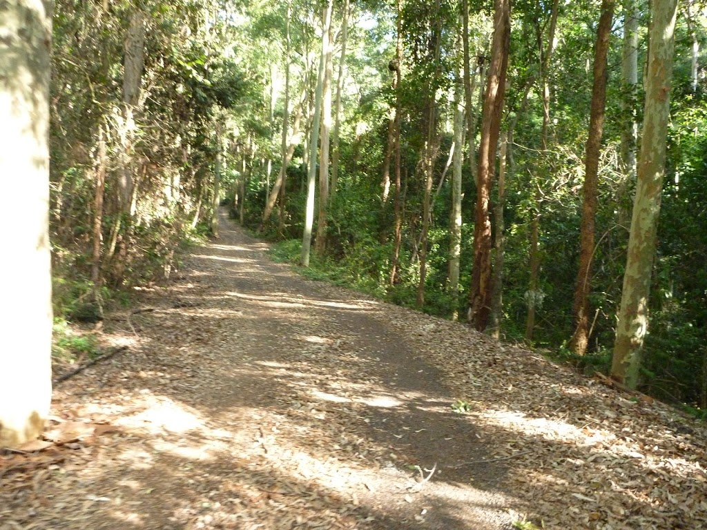 Dense forest close to the Rain Forest Picnic Area in Blackbutt Reserve