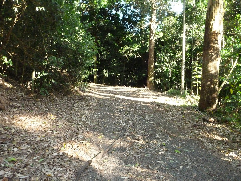 Forest trail in Blackbutt Reserve