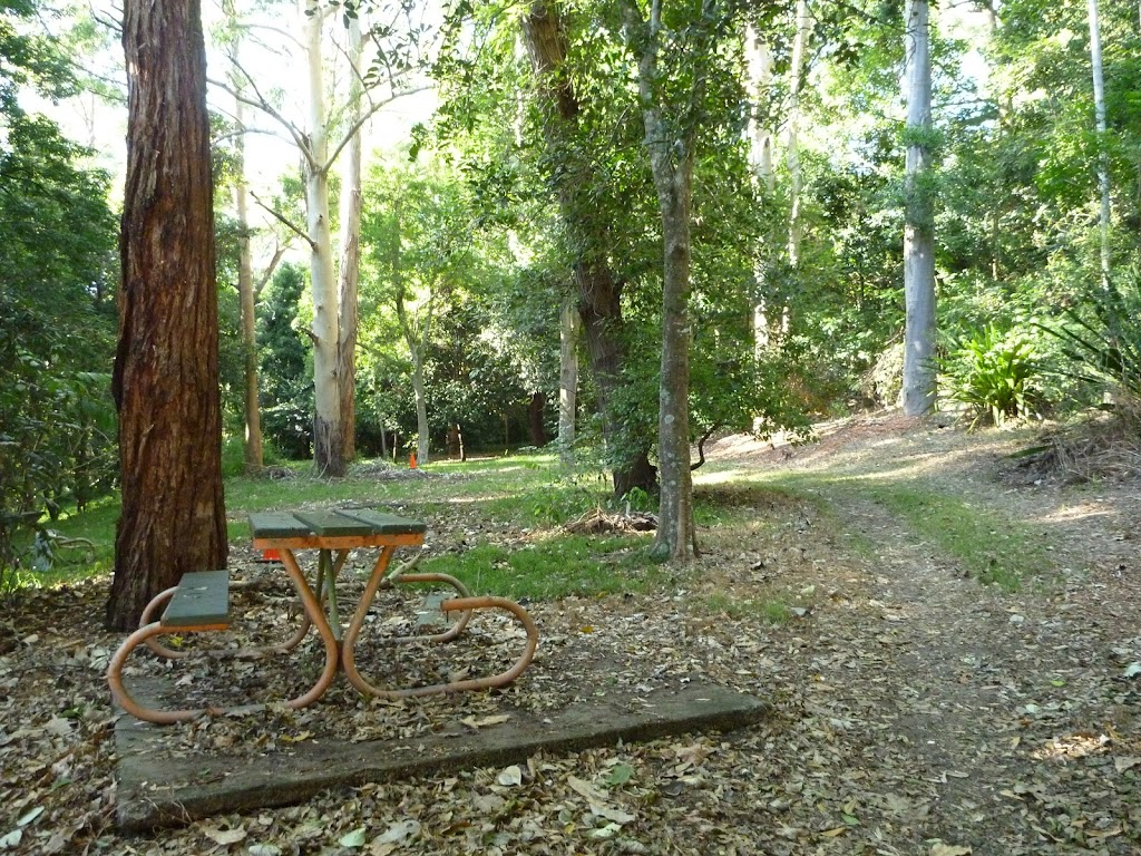 The Rain Forest Picnic Area at Blackbutt Reserve