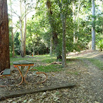 The Rain Forest Picnic Area at Blackbutt Reserve (399742)