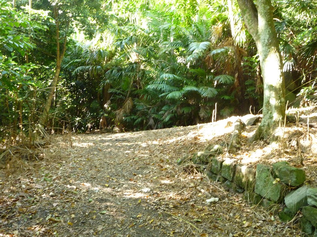 Trail at Blackbutt Reserve