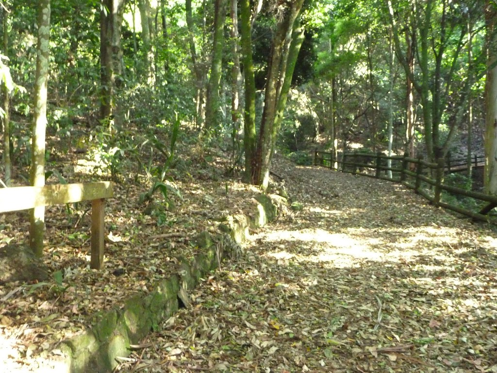 Leafy trail close to the Rain Forest Picnic Area in the Blackbutt Reserve