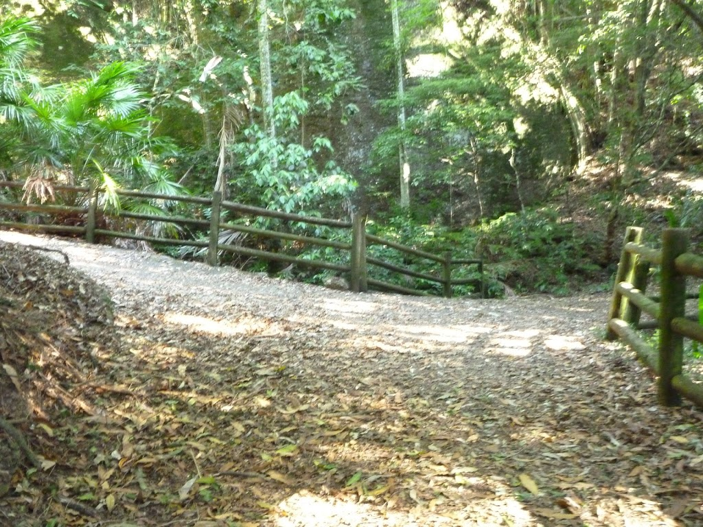 Timber fence by bridge over Rain Forest Creek in Blackbutt Reserve
