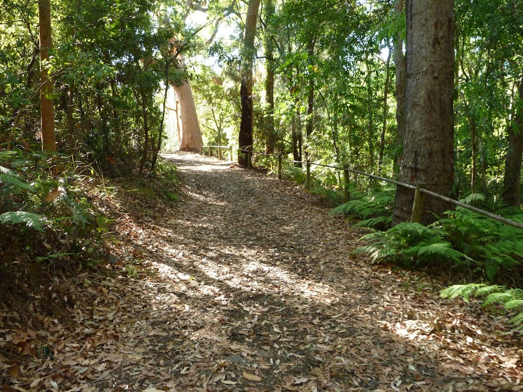 Uphill track in the Blackbutt Reserve