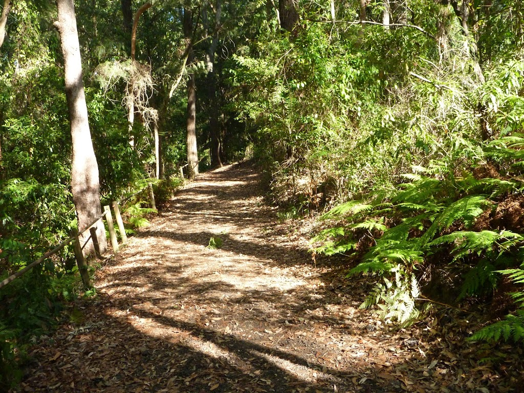 Track to Rain Forest in Blackbutt Reserve