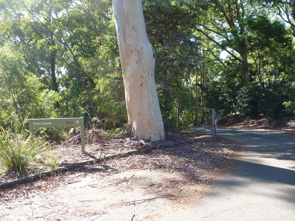 Sign and large tree in Lookout Road Car Park in Blackbutt Reserve (399913)