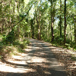 Trail on a sunny day in Blackbutt Reserve