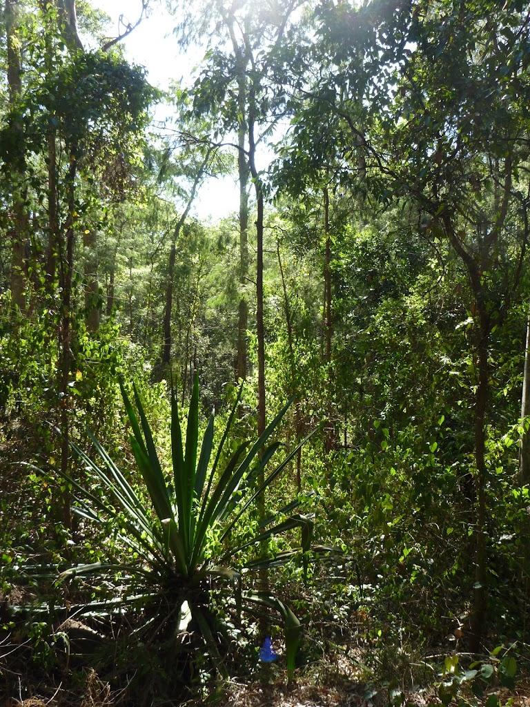 Attractive plants on the Main Ridge Walk in Blackbutt Reserve
