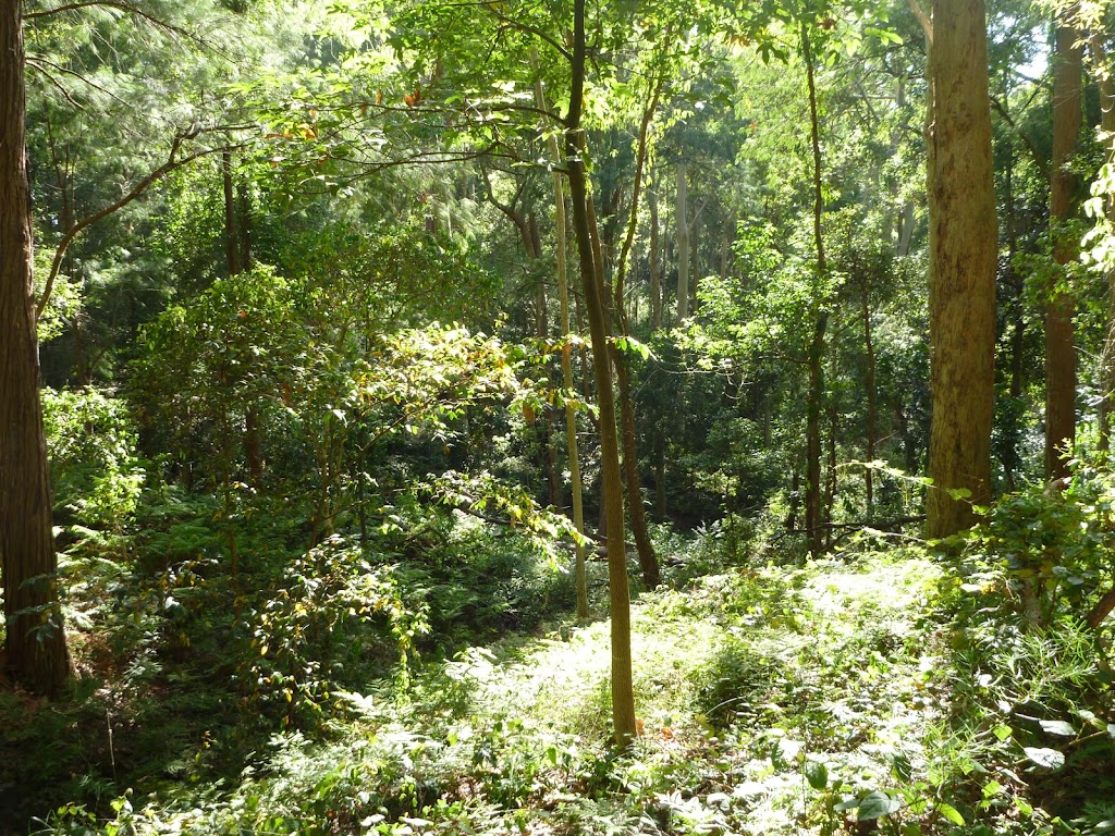 Vegetation found in Blackbutt Reserve