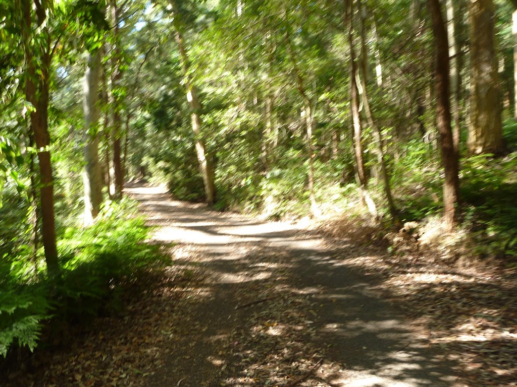 Trail through forest in the Blackbutt Reserve
