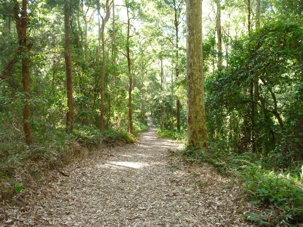 Leafy trail in Blackbutt Reserve (400003)