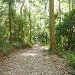 Leafy trail in Blackbutt Reserve (400003)