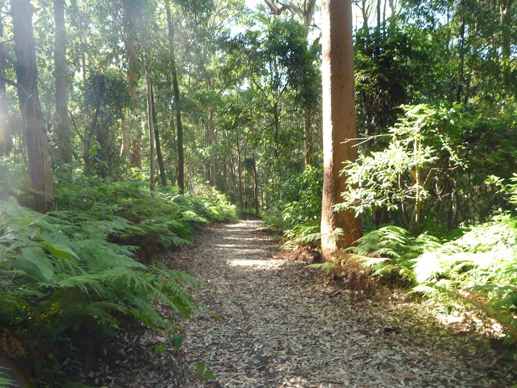 Attractive fern forest in Blackbutt Reserve