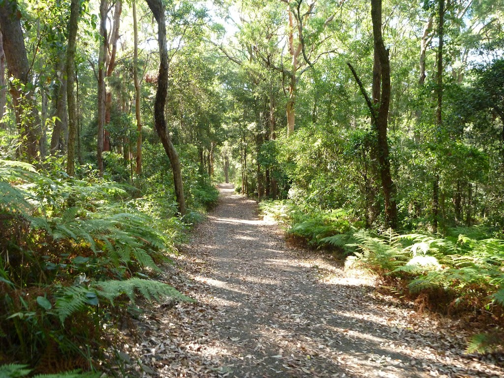 Trail through moist forest on the Blueberry Ash Trail in the Blackbutt Reserve