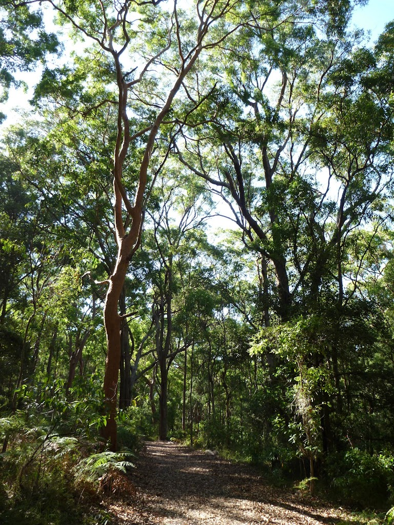 Views through the forest in the Blackbutt Reserve