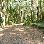 Trail into the forest on the Blueberry Ash Trail in the Blackbutt Reserve
