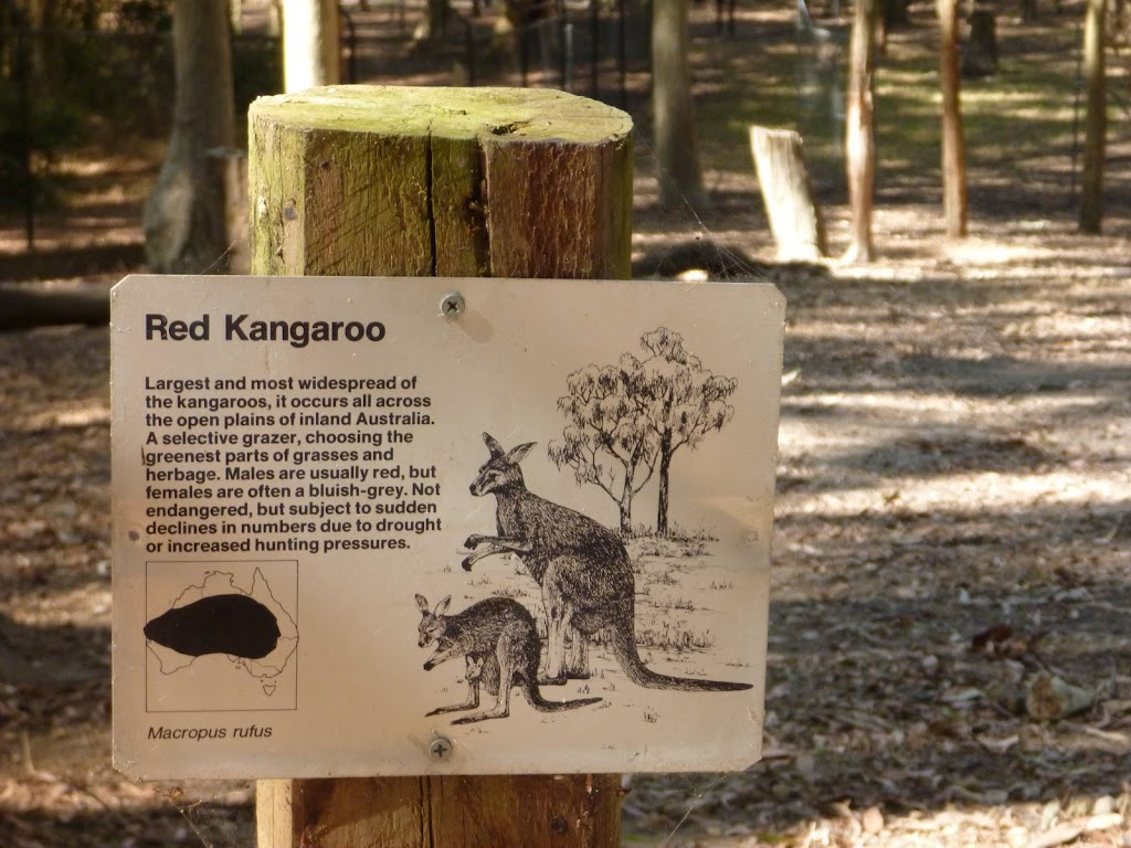 'Red Kangaroo' sign at Carnley Ave Reserve