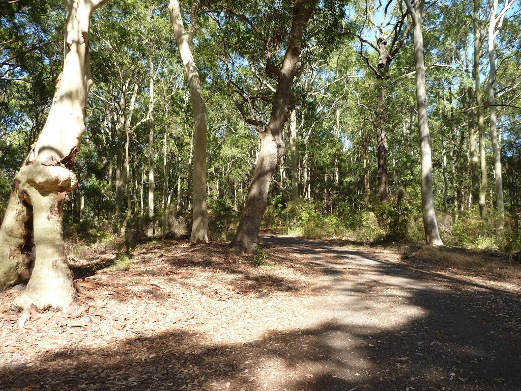 Trail in forest in Blackbutt Reserve (400231)