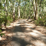 Trail through well established fores in Blackbutt Reserve