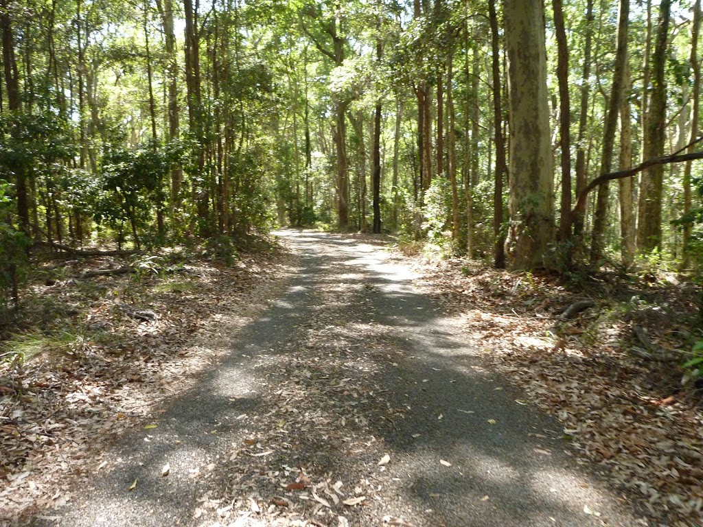 Sealed trail through forest in the Blackbutt Reserve