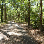 Forest on a sunny day in Blackbutt Reserve