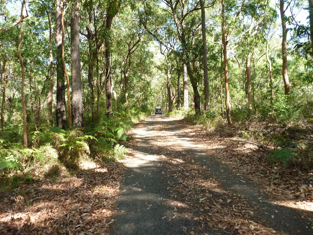A section of the Blueberry Ash Trail in Blackbutt Reserve