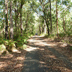 A section of the Blueberry Ash Trail in Blackbutt Reserve (400273)