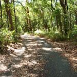 Wide trail in the Blackbutt Reserve (400276)