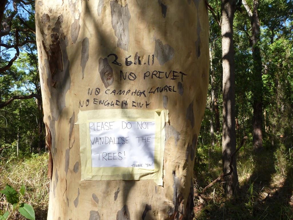 Graffiti on a tree in the Blackbutt Reserve