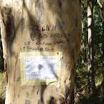 Graffiti on a tree in the Blackbutt Reserve