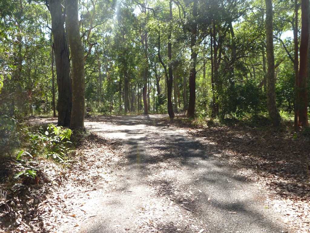 Trail in the Blackbutt Reserve