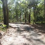 Trail in the Blackbutt Reserve (400351)