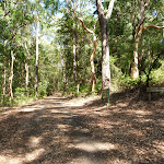 Wide trail through forest in Blackbutt Reserve