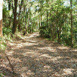 Trail in Blackbutt Reserve and near Lookout Road (400516)