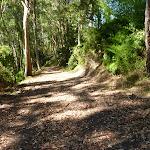 Trail in Blackbutt Reserve near Lookout Road
