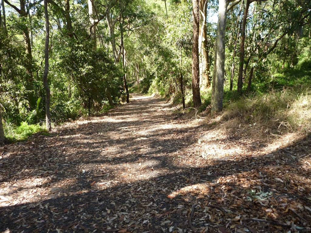 Trail through forest in Blackbutt Reserve near Lookout Road