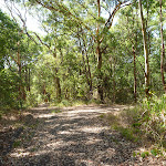 Trail intersection near Bower Bird Creek in Blackbutt Reserve