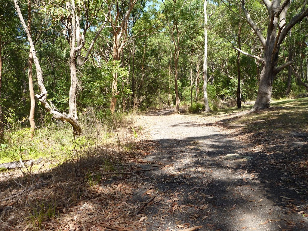 Forested track near the Lily Pond Picnic Area in Blackbutt Reserve