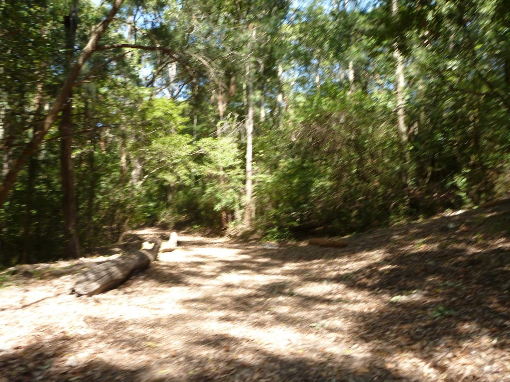 Trail near houses in Blackbutt Reserve