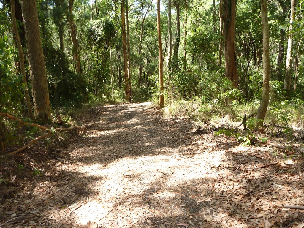 Forested trail near Lily Pond Picnic Area in Blackbutt Reserve