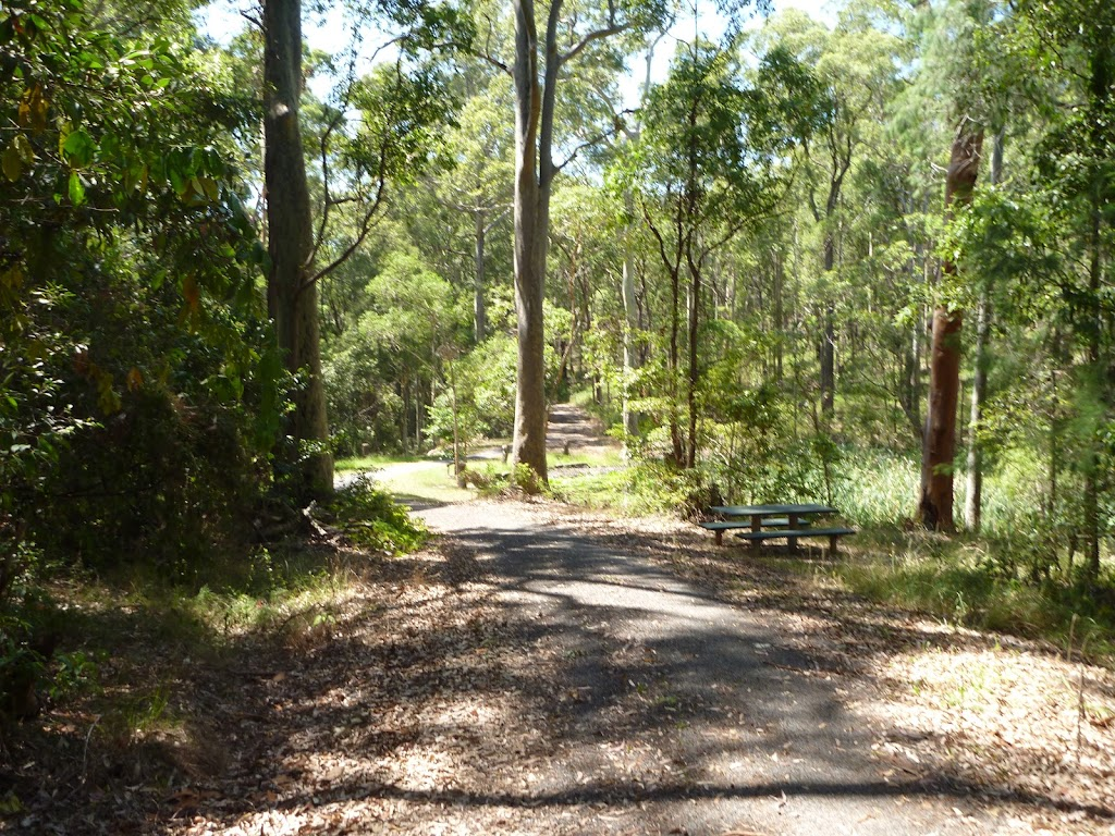 Forested trail with Lily Pond Picnic Area in the distance in Blackbutt Reserve