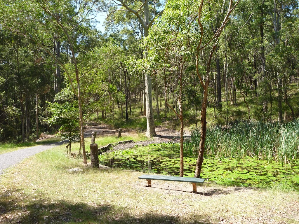 Bench with Lily Pond beyond at Lily Pond Picnic Area in Blackbutt Reserve