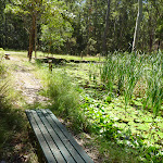 Seating bench beside Lily Pond in Blackbutt Reserve