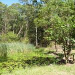 Lily Pond Picnic Area in Blackbutt Reserve