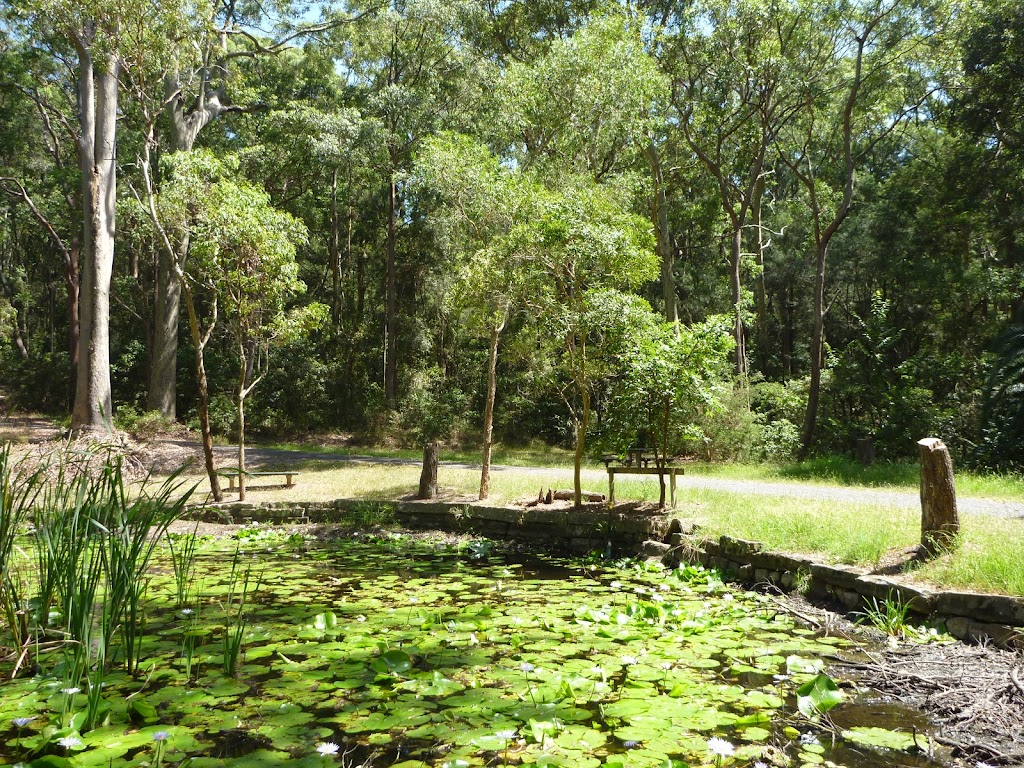 Lily Pond Picnic Area in the middle of Blackbutt Reserve