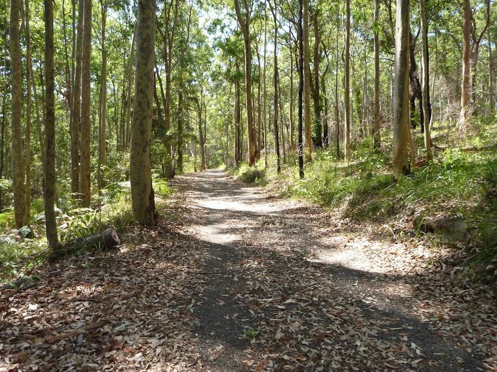 Trail near Lily Pond Picnic Area in Blackbutt Reserve