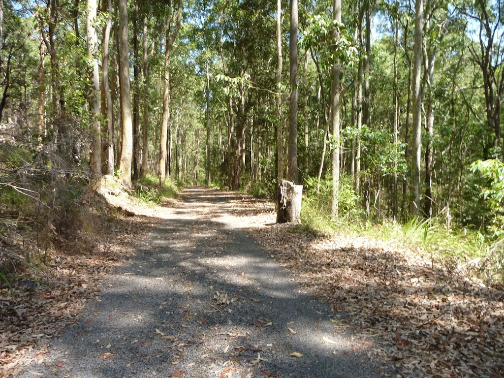 Forested trail near Mahognay Picnic Area in Blackbutt Reserve