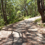 Trail near Mahognay Picnic Area in Blackbutt Reserve (401191)