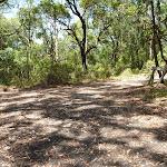 Trail near Mahognay picnic area in Blackbutt Reserve